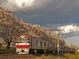 桜とEH500