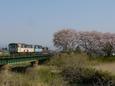 春の犀川を渡るレールバス