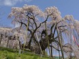 青空と滝桜