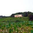 蓮根畑とKR500