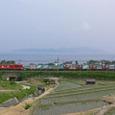 琵琶湖沿いを北上して行く貨物列車