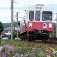 線路沿いに咲く花たち