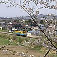 葉桜とYR1500