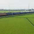 緑の絨毯を横切る「日本海」