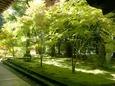 方丈殿脇の庭にて