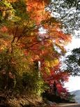 朝日に映える紅葉の木々