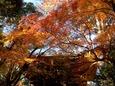 山門にかかる紅葉のアーチ