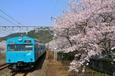 桜出迎えて