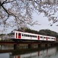 桜といちご電車