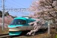 桜とドルフィン