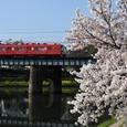 桜と赤い電車