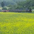 菜の花畑とSL列車