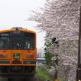 満開の桜とメロス号