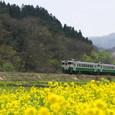 菜の花絨毯と普通列車