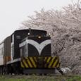 春爛漫、ストーブ列車