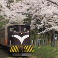 桜のトンネルを行くストーブ列車