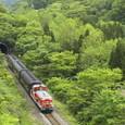 新緑の谷を行くレトロ列車
